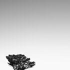 A long dry summer by David Haviland