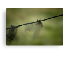 0084  Wool on the Wire Canvas Print