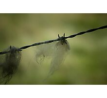 0084  Wool on the Wire Photographic Print