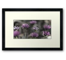 A Dream of Daisies Framed Print