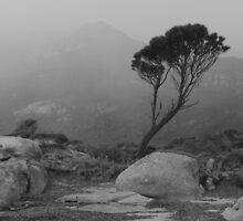Fotheringate Beach Flinders Island by Andrew  Makowiecki
