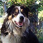 Wonder Dog by Michael Haslam