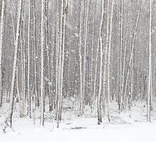 Snowfall by Remo Savisaar