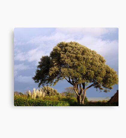 Oak by the sea Canvas Print