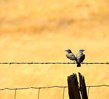 California Love Birds by Michael McCann