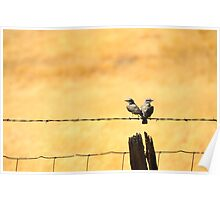California Love Birds Poster