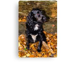Scooby in Autumn leaves Canvas Print