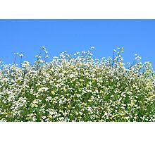 Wildflowers and Blue Skies Photographic Print