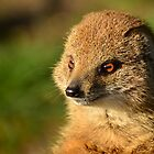 Vosmangoest / Yellow Mongoose by Jacqueline van Zetten