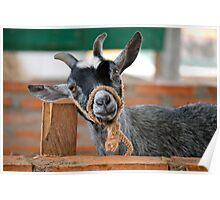 Honduran Goat Poster