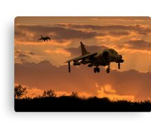 Hunting Harriers Canvas Print
