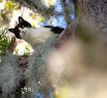whatcha doin down there? by james smith