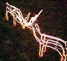 Reindeers by Barry James Roberts