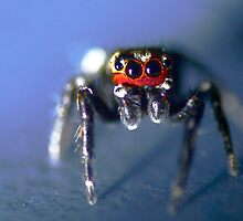 Big scary spider (not) by Graeme M
