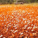 Orange Field by Handy Andy Pandy
