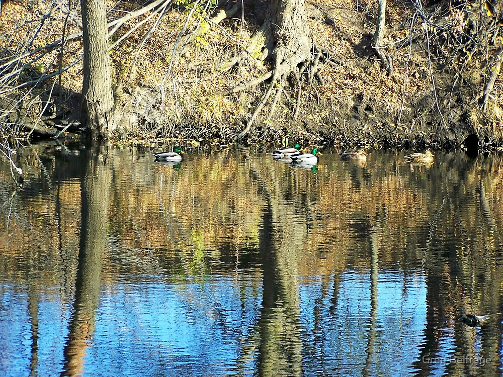 Greenheads on Glass by Greg Belfrage