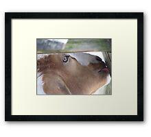 Arnie Goat Framed Print