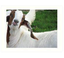 Doyle Goat Art Print