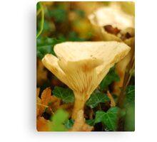 The Common Funnel Cap Mushroom Canvas Print
