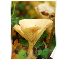 The Common Funnel Cap Mushroom Poster