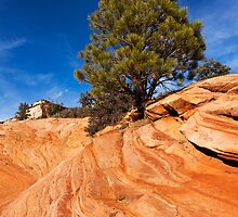 Red Rock Conifer by James Marvin Phelps