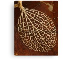 Lacy Leaf Canvas Print