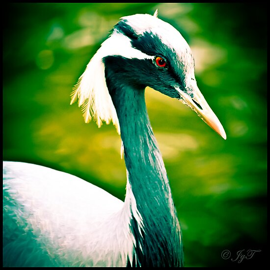 A Crane by johnjgt