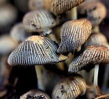 Family Shroom by Ken Glotfelty