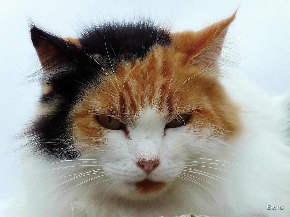 A feral friend .. by Berns