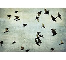Let's fly Photographic Print