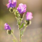 Purple Flowers in Sunlight by handyandypandy