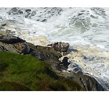 Seals in Sea Froth Photographic Print
