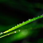 Drops on a straw by marina63