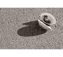 Lone Clamshell Photographic Print