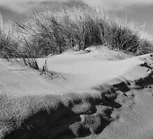 Sand dune on Staten Island by Nancy de Flon