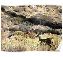 Deer in The Canyon Poster