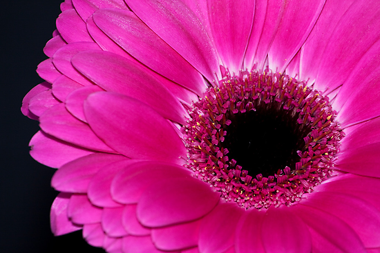 Pink and Black by Ray Clarke