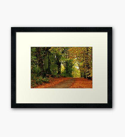 Autumnal return Framed Print