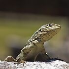 Quirky lizard from Machu Picchu  by craftybadger