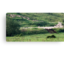 Follow the Leaders-Monterosi, Italy Canvas Print