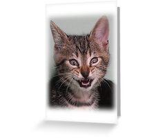 Cute kitten (Tyger) smiling Greeting Card