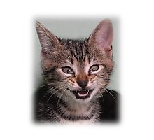 Cute kitten (Tyger) smiling Photographic Print