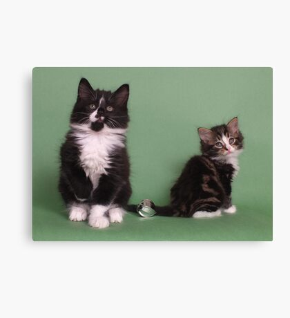 Two cute kittens Canvas Print
