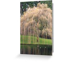 Tree at Bloedel Reserve, Bainbridge Island Greeting Card
