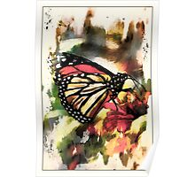 Monarch on Zinnia Poster