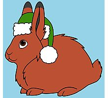 Red Arctic Hare with Christmas Green Santa Hat Photographic Print