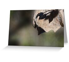 Leaf Shadows Greeting Card