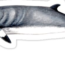Minke whale Sticker