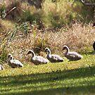 Wetland Strolling by byronbackyard