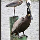 Heron and Pelican Parking by Mikell Herrick